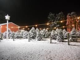 live christmas tree farms christmas lights decoration