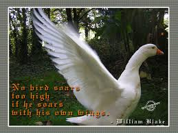 quotes about bird sualci quotes