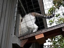 Interior Cat Door With Flap by The Cat Flap Or Door The Cat Site