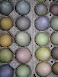 guest post natural easter egg dyes 100 days of real food