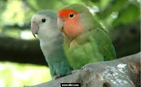 عصافيرررر images?q=tbn:ANd9GcR