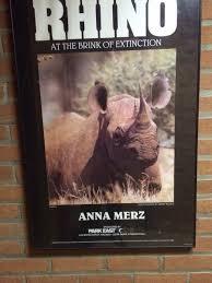 Ermahgerd Animal Memes - speaker s name for presentation on rhinoceros is like an ermahgerd