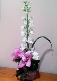 What Is An Orchid Flower - simplicity is an orchid the flower den