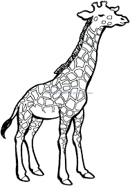 giraffe coloring pages cute giraffes baby cartoon baby giraffe