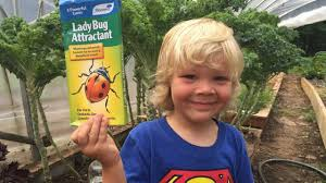 How To Find Ladybugs In Your Backyard How To Attract Ladybugs Youtube