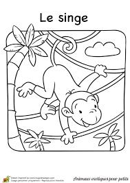 en coloriant ce dessin tu rendras ce petit singe encore plus
