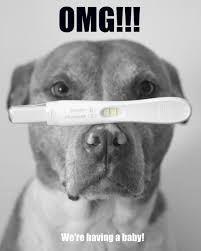 Dog Going Blind What To Do Best 25 Pregnancy Announcement Dog Ideas On Pinterest Baby