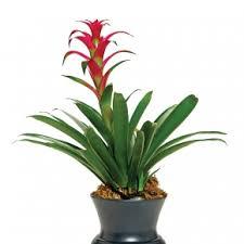 christmas plants christmas plants floral jackson wy 83001 thefloralartist