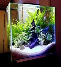 Aquascape Layout The World U0027s Top 10 Best Themed Fish Tanks 5 584x515 Jpg 584 515