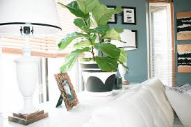 fiddle leaf fig tree and pot from ikea nowathomemom arafen