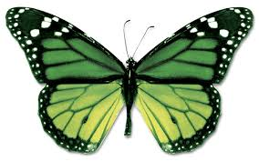 Blue And Green Butterfly - of papilio lorquinianus aqua blue green swallowtail clip