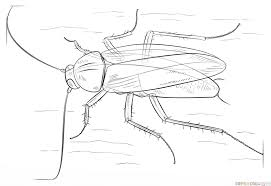how to draw a german cockroach step by step drawing tutorials