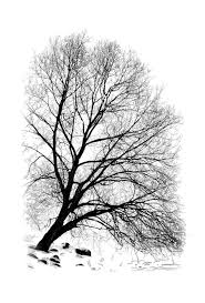 winter tree a sketch show your essentials creations