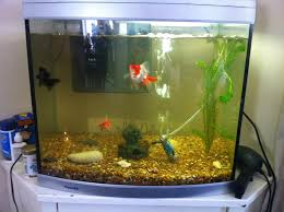 fishkeeping little schools of cold water fish forums