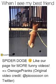 Doge Meme Original - when see my best friend own age pranks cop spider doge like our