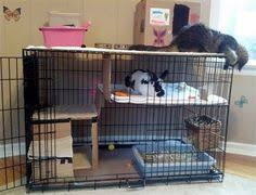 Rabbit Hutch For Multiple Rabbits This Is A Very Cool Habitat Set Up Then He Could Have More Room