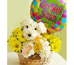 balloon delivery walnut creek ca jory s flowers send dog able in walnut creek and concord ca