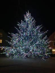 elveden christmas trees home facebook
