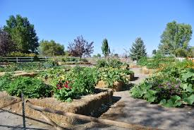 Reno Green Landscaping by Author Ashley Andrews Grow Your Own Nevada