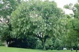 trees of lake lake ia official website