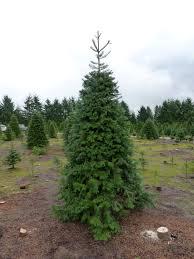christmas tree u2013 mark my words u2026