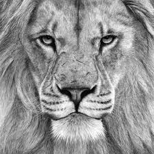 charcoal pencil drawings of nature drawing of sketch