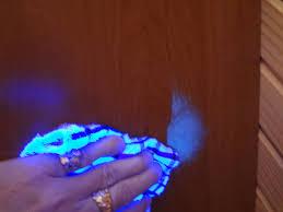black light and germs blacklightworld com black light reactive germ splatter