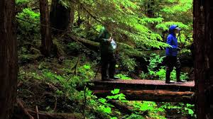 Alaska Forest images Alaska rain forests abundant in life jpg