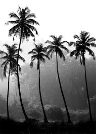 posters photographic image of palms in black and white 50 x 70 cm