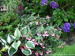 202 best shade loving plants and gardens images on pinterest