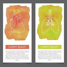 Human Anatomy Images Free Download Banners About Human Anatomy Heart And Lung Vector Free Download