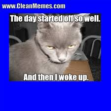 cat memes clean memes the best the most online page 3