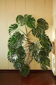 Tropische Pflanzen Im Garten Best 25 Exotische Zimmerpflanzen Ideas On Pinterest Exotische