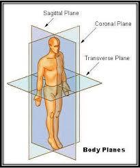 Anatomy And Physiology Class Hinz Jaclynn Anatomy And Physiology