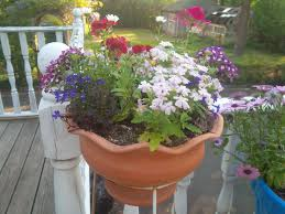 container gardening fafardcontainer gardening archives fafard