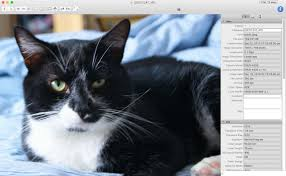 best free u0026 cheap photo editing software for mac macworld uk