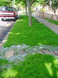 Backyard Ground Cover Options 73 Best Plants Grasses Images On Pinterest Backyard Ideas