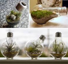 25 unique light bulb terrarium ideas on led grow