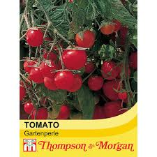 tomato u0027gartenperle u0027 thompson u0026 morgan