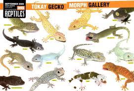 my office gecko dumaguete info