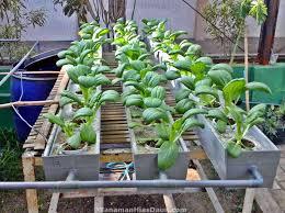 cara membuat cairan hidroponik formula nutrisi hidroponik untuk tanaman sayur dan buah