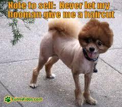 Bad Dog Meme - shaved dog