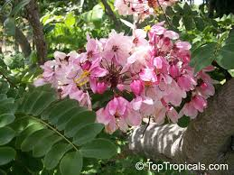 toptropicals com plants for home and garden