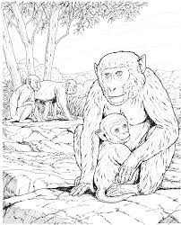 chimpanzee coloring pages getcoloringpages com