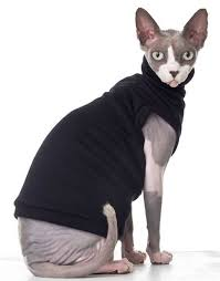 sphynx sweaters sphynx cat sweater 2018 cats