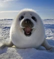 2014 u0027s top 10 cutest stories awesome ocean