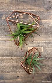 missouri native plant nursery 16 best missouri native plants images on pinterest native plants