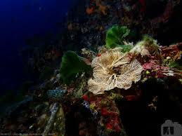 crocodile rock calypso sub aqua club malta