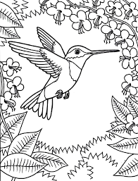 ruby throated hummingbird coloring pages coloringstar