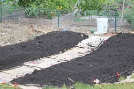 creative vegetable gardener front yard vegetable garden expansion